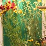 Traditional Dye Plants